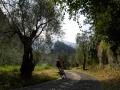 Biking_collection